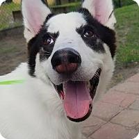 Adopt A Pet :: Blackjack - Clearwater, FL
