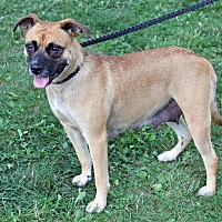 Adopt A Pet :: FiFi - Joliet, IL