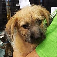 Adopt A Pet :: Lexi - West Palm Beach, FL