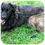 Photo 2 - Australian Shepherd/Shepherd (Unknown Type) Mix Dog for adoption in Seattle, Washington - Chewy
