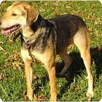 Adopt A Pet :: Daisy III (Daisy Duke) - Salem, OH
