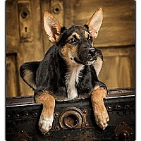 Adopt A Pet :: Valerie - Owensboro, KY
