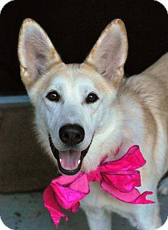 Shepherd (Unknown Type)/Husky Mix Dog for adoption in Baton Rouge, Louisiana - Leah
