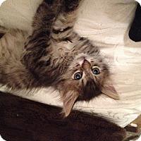 Adopt A Pet :: Flynn - Santa Rosa, CA