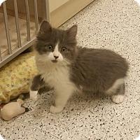 Adopt A Pet :: Miney - Phoenix, AZ