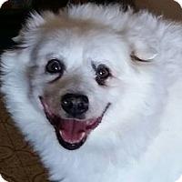 Adopt A Pet :: Dreamer - St. Louis, MO