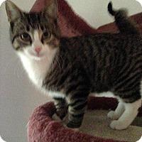 Adopt A Pet :: Johan - College Station, TX