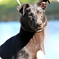 Adopt A Pet :: Maggie - Pawling, NY