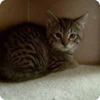 Adopt A Pet :: ROGAN - Medford, WI