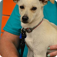 Adopt A Pet :: Peanut #1242 - Arlington Heights, IL