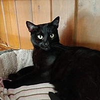 Adopt A Pet :: Queen - Middletown, NY