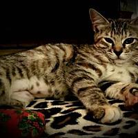 Adopt A Pet :: Idaho - Drippings Springs, TX