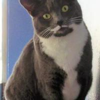 Adopt A Pet :: Becka - Wichita Falls, TX