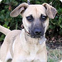 Adopt A Pet :: Zenith - San Diego, CA