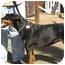 Photo 1 - Doberman Pinscher Dog for adoption in San Diego, California - Keona