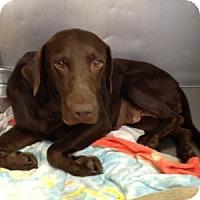 Adopt A Pet :: Joslyn - Cumming, GA