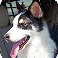 Adopt A Pet :: Aztec - Santa Fe, NM