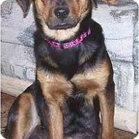 Adopt A Pet :: Delilah - Evansville, IN