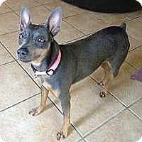 Adopt A Pet :: Precious - Nashville, TN