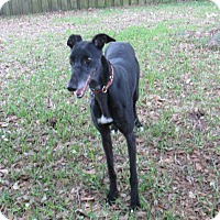 Adopt A Pet :: Aspen - Tampa, FL