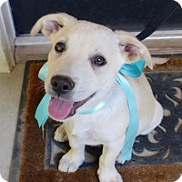 Adopt A Pet :: graham - Baton Rouge, LA