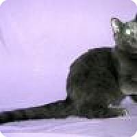 Adopt A Pet :: Delia - Powell, OH