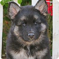 Adopt A Pet :: Plum von Sequoia - Thousand Oaks, CA