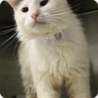 Adopt A Pet :: Athena - Harrisburg, NC