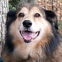 Adopt A Pet :: BONBON - Albany, NY