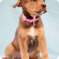 Adopt A Pet :: Princess - Waldorf, MD