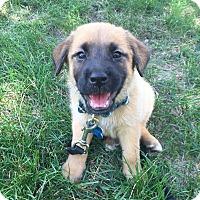 Adopt A Pet :: Aspen - Plainfield, IL