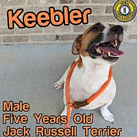 Adopt A Pet :: Keebler - Nicholasville, KY