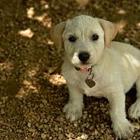 Adopt A Pet :: Angelica - San Antonio, TX