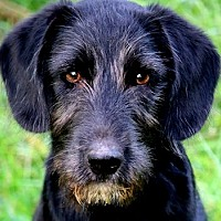 Adopt A Pet :: TANNER(ADORABLE