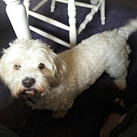 Adopt A Pet :: Chance - New York, NY