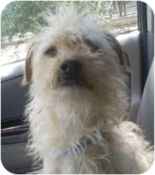 Terrier (Unknown Type, Medium) Mix Dog for adoption in Fillmore, California - Taffy