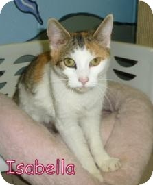Domestic Shorthair Cat for adoption in Georgetown, South Carolina - isabella