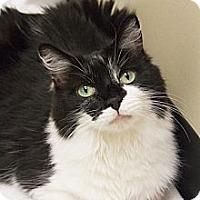 Adopt A Pet :: Muffin - Chicago, IL
