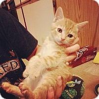 Adopt A Pet :: Whitey - Ft. Lauderdale, FL