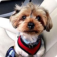 Adopt A Pet :: Doug - Fairfax, VA