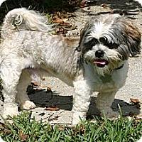Adopt A Pet :: Rascal - Cantonment, FL