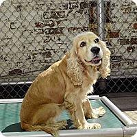 Adopt A Pet :: Jodi - New York, NY