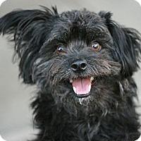 Adopt A Pet :: Matlock - Canoga Park, CA