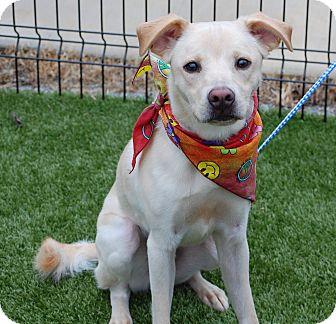 Labrador Retriever Mix Dog for adoption in Cumming, Georgia - Chester