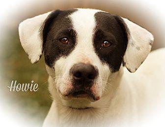 Hound (Unknown Type) Mix Dog for adoption in Martinsville, Indiana - Howie