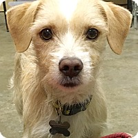 Adopt A Pet :: Freddy - San Pedro, CA