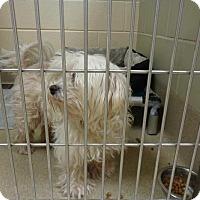 Adopt A Pet :: Mr. Muffin - Virginia Beach, VA