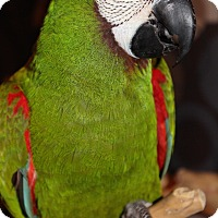Adopt A Pet :: Monet - Woodbridge, NJ
