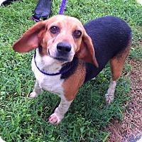 Adopt A Pet :: Wren - Metamora, IN