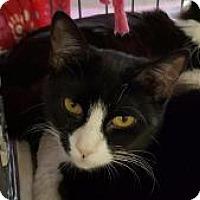 Adopt A Pet :: Firefly - Raritan, NJ